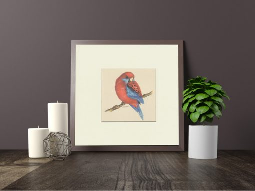 Crimson Rosella Print