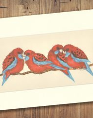Crimson Rosella Print Medium