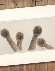 Emus Print Medium