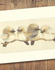 Kookaburra Print Medium