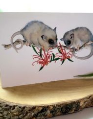Possum Greeting Card