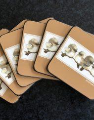 Kookaburra Coasters