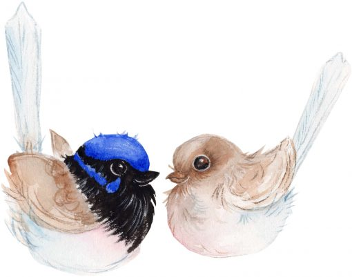 Blue Wrens Resting Birds Wall Sticker